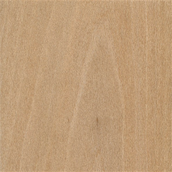 "2-1/4"" Plain Sawn Sycamore Clear Paneling"